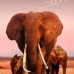 The Elephant Queen (2019)